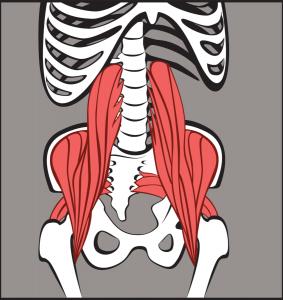Abdomen9---HipFlexorsPiriformis